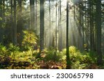 Aurumn Morning In The Forest