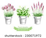 Vector Set Of Provence Herbs....