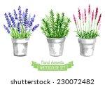 vector set of provence herbs.... | Shutterstock .eps vector #230072482