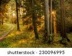 black forest in germany. orange ... | Shutterstock . vector #230096995