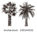 2 Hand Drawn Palm Trees In...