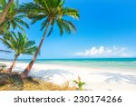 beautiful beach with coconut... | Shutterstock . vector #230174266