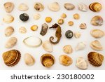 shells on a solid background | Shutterstock . vector #230180002