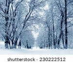 winter nature  trees and alley... | Shutterstock . vector #230222512