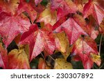 colors of fall leaf frame.... | Shutterstock . vector #230307892