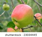 apple | Shutterstock . vector #23034445