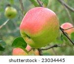 apple | Shutterstock . vector #23034445