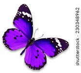 beautiful purple butterfly... | Shutterstock . vector #230348962