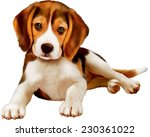 Stock vector beagle puppy laying over white background 230361022