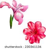 vector violet iris flower... | Shutterstock .eps vector #230361136