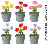 variety of flowers in pots   Shutterstock .eps vector #230368795