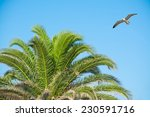 Seagull Flying Over A Palm Tre...