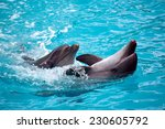 Two dolphins close up.