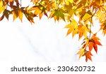 Autumn In Hokkaido  Japan