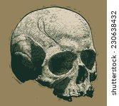 skull. engraving style. vector... | Shutterstock .eps vector #230638432
