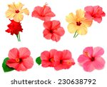 collection of colored hibiscus... | Shutterstock . vector #230638792