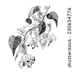 twig with berries | Shutterstock . vector #230654776
