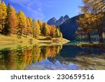Fall Colored Larch Trees Are...