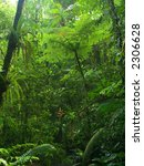 A Luxuriant And Dense Jungle...