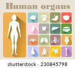 icons of human organs flat... | Shutterstock . vector #230845798