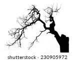 Dead Tree On White Background ...