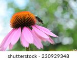 wonderful pink flower green bug | Shutterstock . vector #230929348