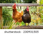 happy chickens   Shutterstock . vector #230931505