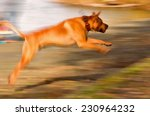 fast running dog with blurred... | Shutterstock . vector #230964232