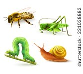 Insects Realistic Colored...