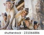 Group Of Baby Monkeys
