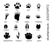 graphic set of animal... | Shutterstock .eps vector #231076972