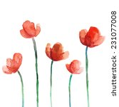 set of watercolor poppy flowers | Shutterstock .eps vector #231077008