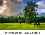 Tree And Horses In A Field  At...