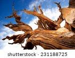 Natures Art   Closeup View Of...