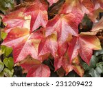 colors of fall leaf frame.... | Shutterstock . vector #231209422