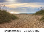 sandy walkway through the dunes ... | Shutterstock . vector #231239482
