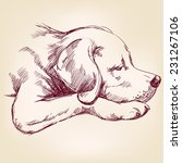 dog hand drawn vector... | Shutterstock .eps vector #231267106