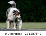 Stock photo dog and cat 231287542
