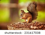 Red Squirrel On A Stump Eating...