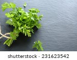 green parsley on dark slate ... | Shutterstock . vector #231623542