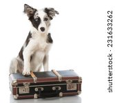 Puppy With Suitcase Isolated On ...