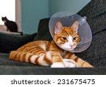 Image Of Orange Cat With...