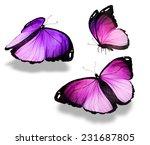 Stock photo flock of butterflies 231687805