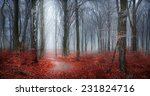 Fairytale Autumn Forest In Fog...