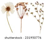Stock photo set of wild dry flowers pressed isolated 231950776