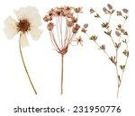 set of wild dry flowers pressed ...   Shutterstock . vector #231950776