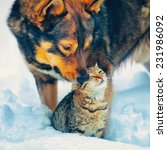 Stock photo the best friends cat and dog outdoor in snowy winter 231986092
