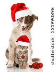 Stock photo christmas cat and dog 231990898