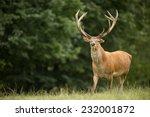 portrait of majestic powerful... | Shutterstock . vector #232001872