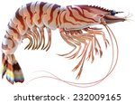 tiger prawn. editable vector...   Shutterstock .eps vector #232009165